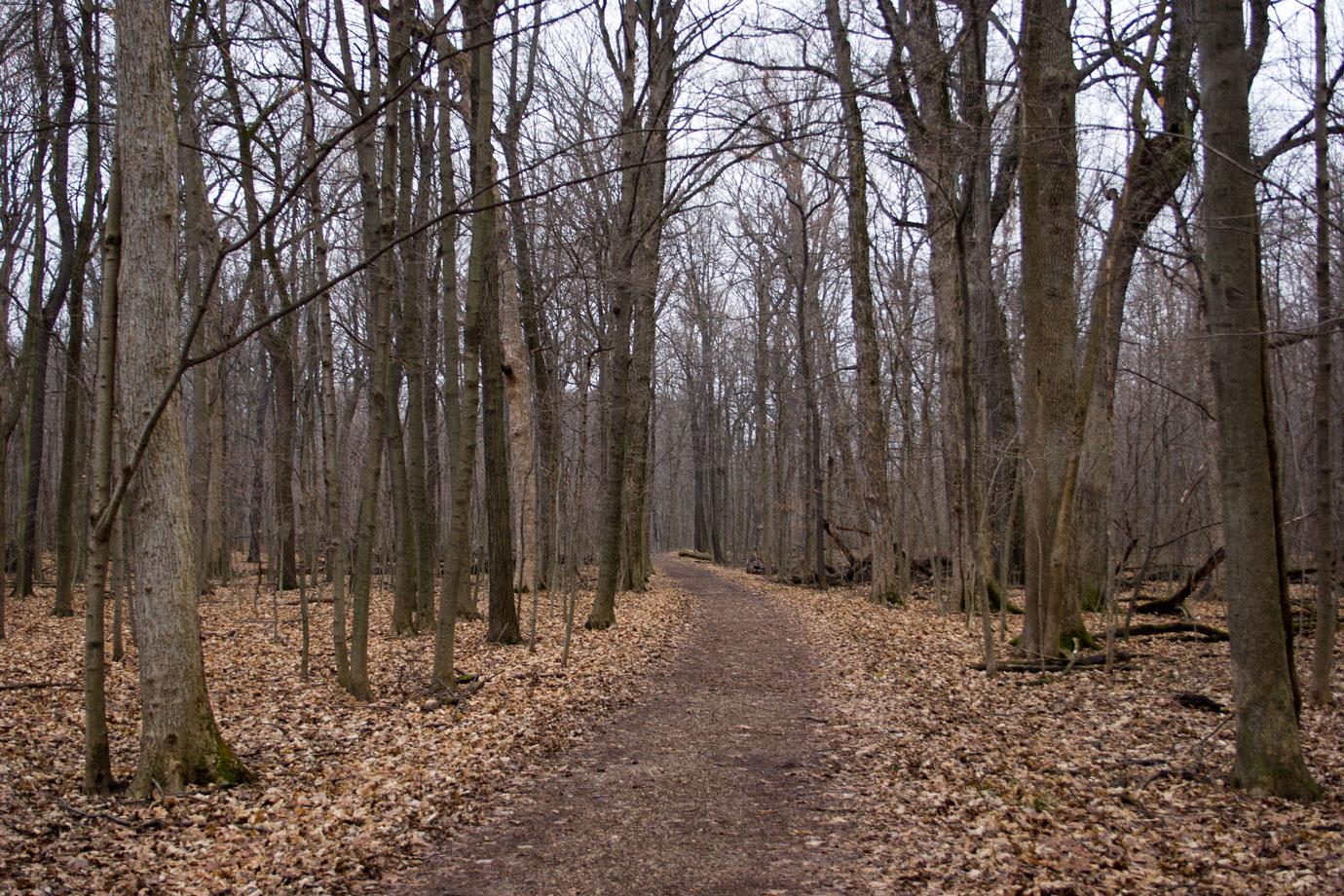 Ryerson Woods