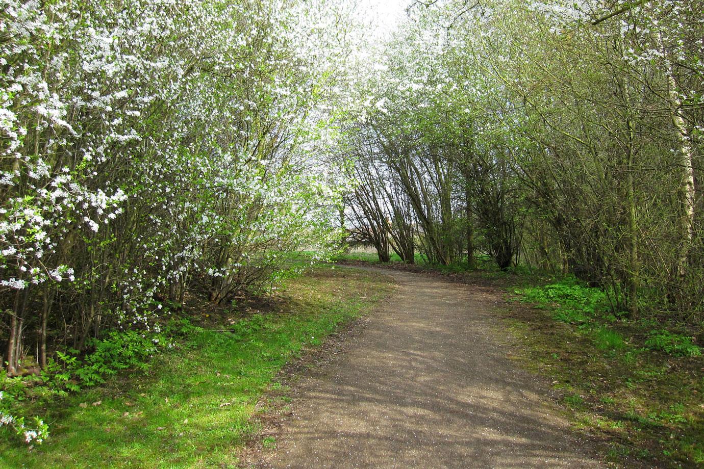 Spring Walk