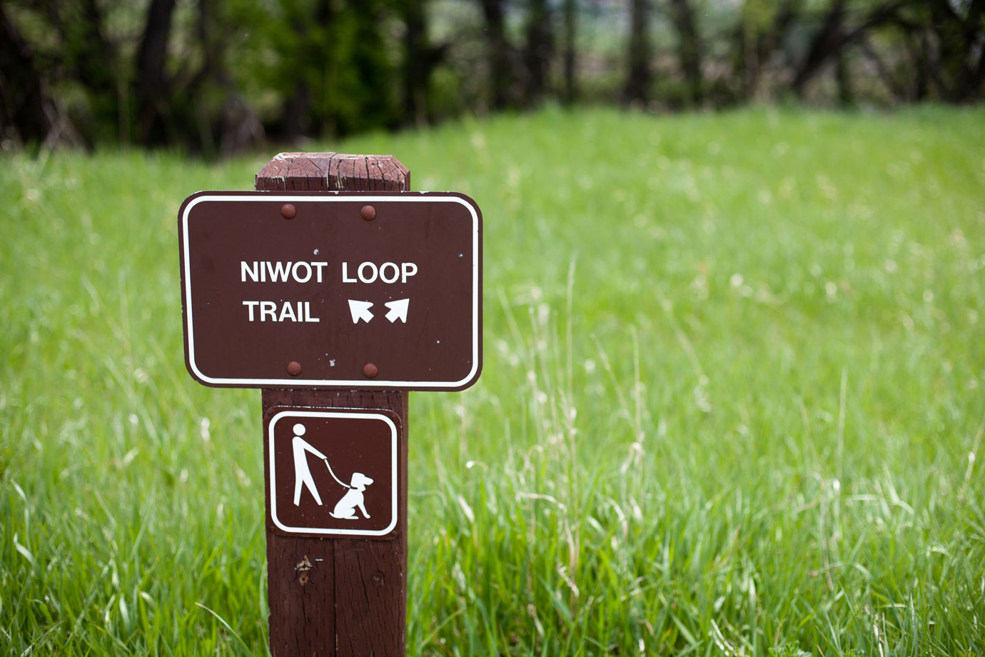 Niwot Loop Trail