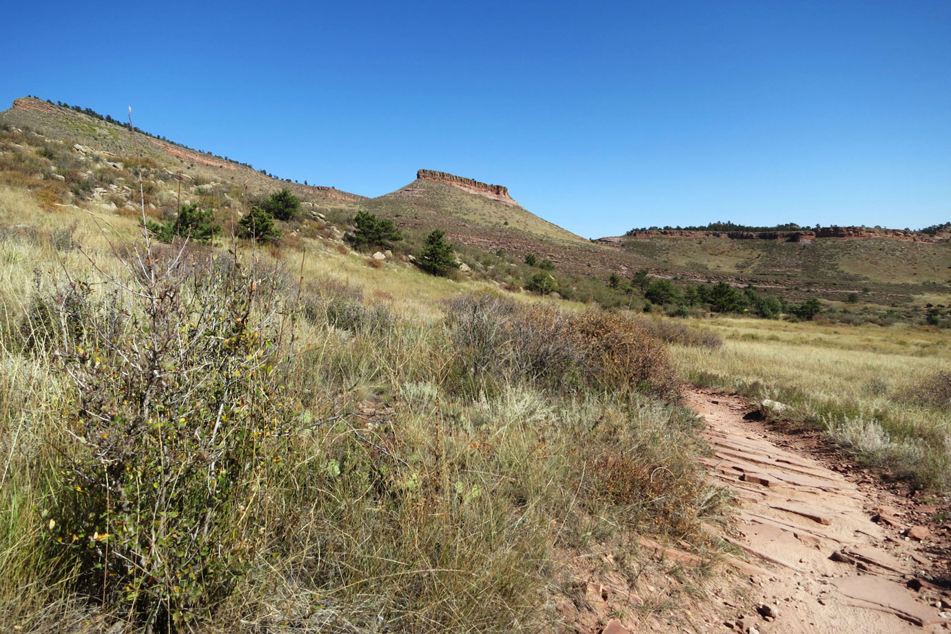 Bitterbrush Trail 1