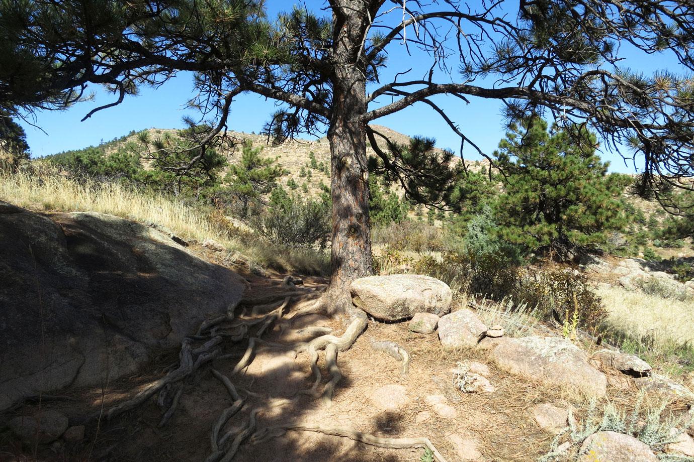 Bitterbrush Trail