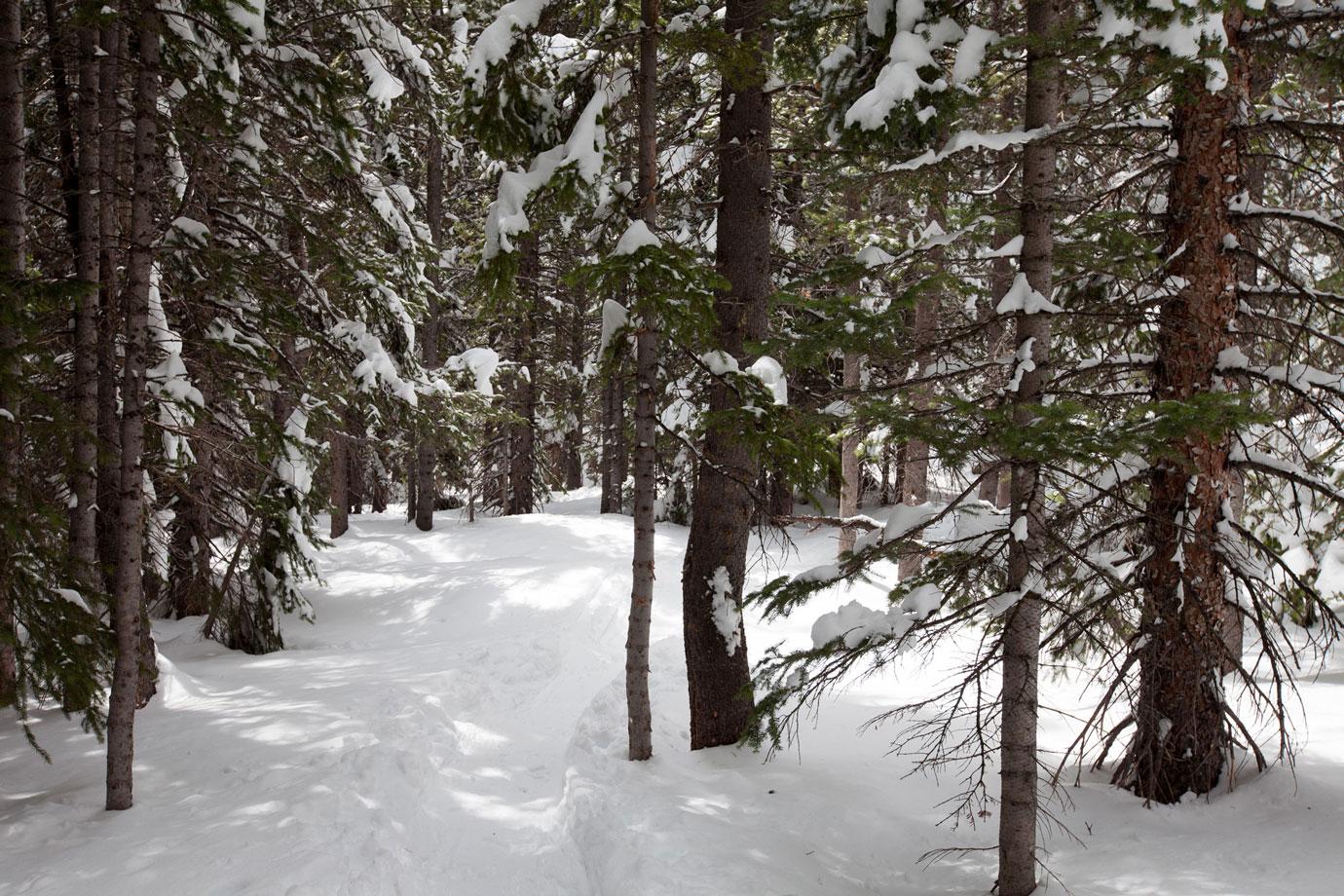 Trail to Nymph Lake